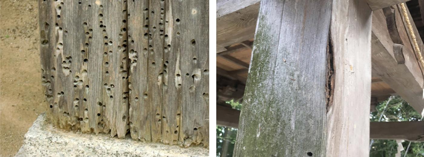 シロアリ以外の昆虫や腐朽菌にも効く